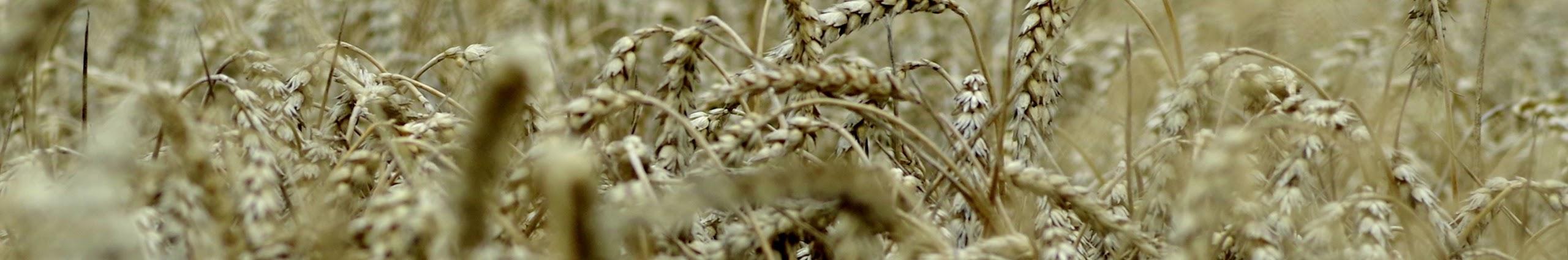 Iniciar el alquiler maquinaria agrícola - Funcionalidades Premium