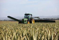 ¿Por qué alquilar y no comprar maquinaria agrícola hoy en día?