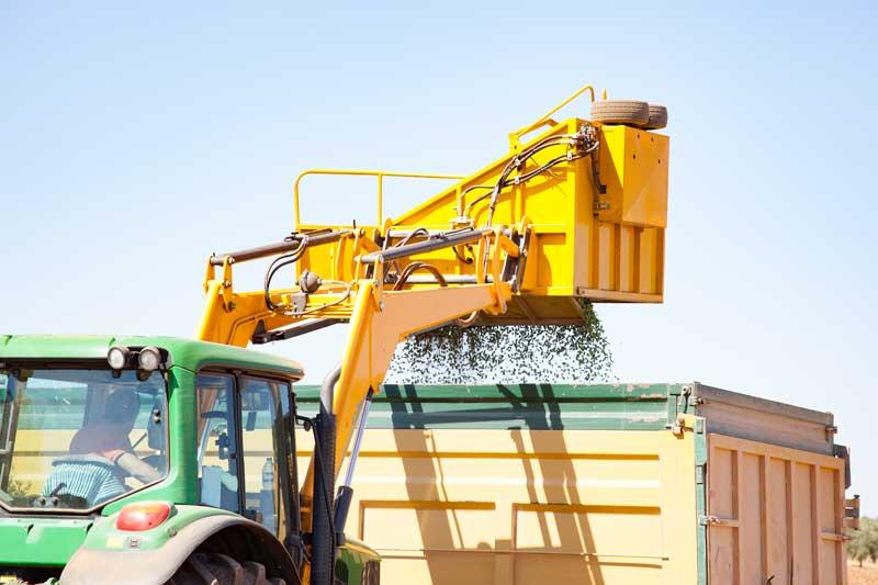 Evolución del olivar en España: del olivar tradicional al olivar superintensivo
