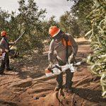 coste plantación olivar intensivo