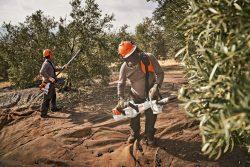 El olivar superintensivo y las ventajas de la mecanización